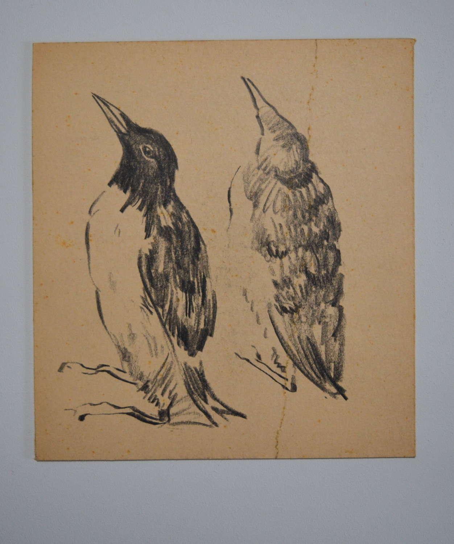HYMAN SEGAL STUDY OF SEA BIRDS