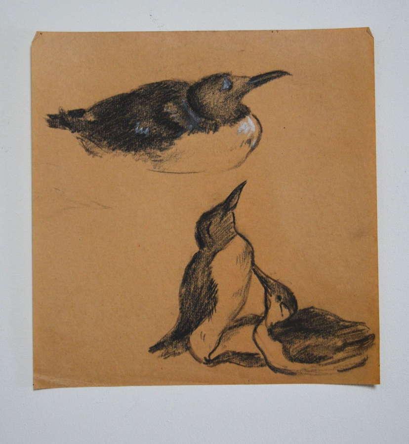 HYMAN SEGAL STUDY OF SEABIRDS